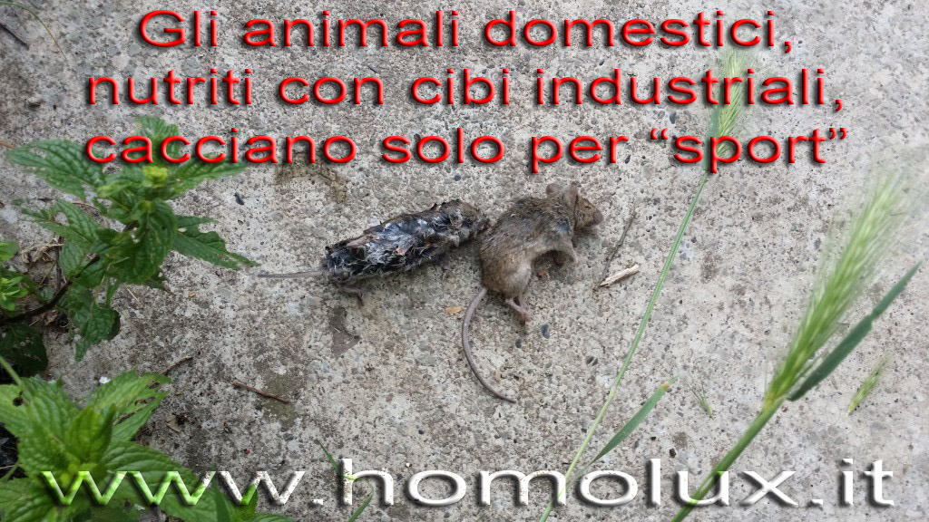 animali domestici caccia sportiva