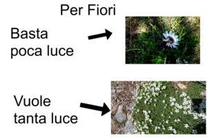 fiori-tanta-poca-luce